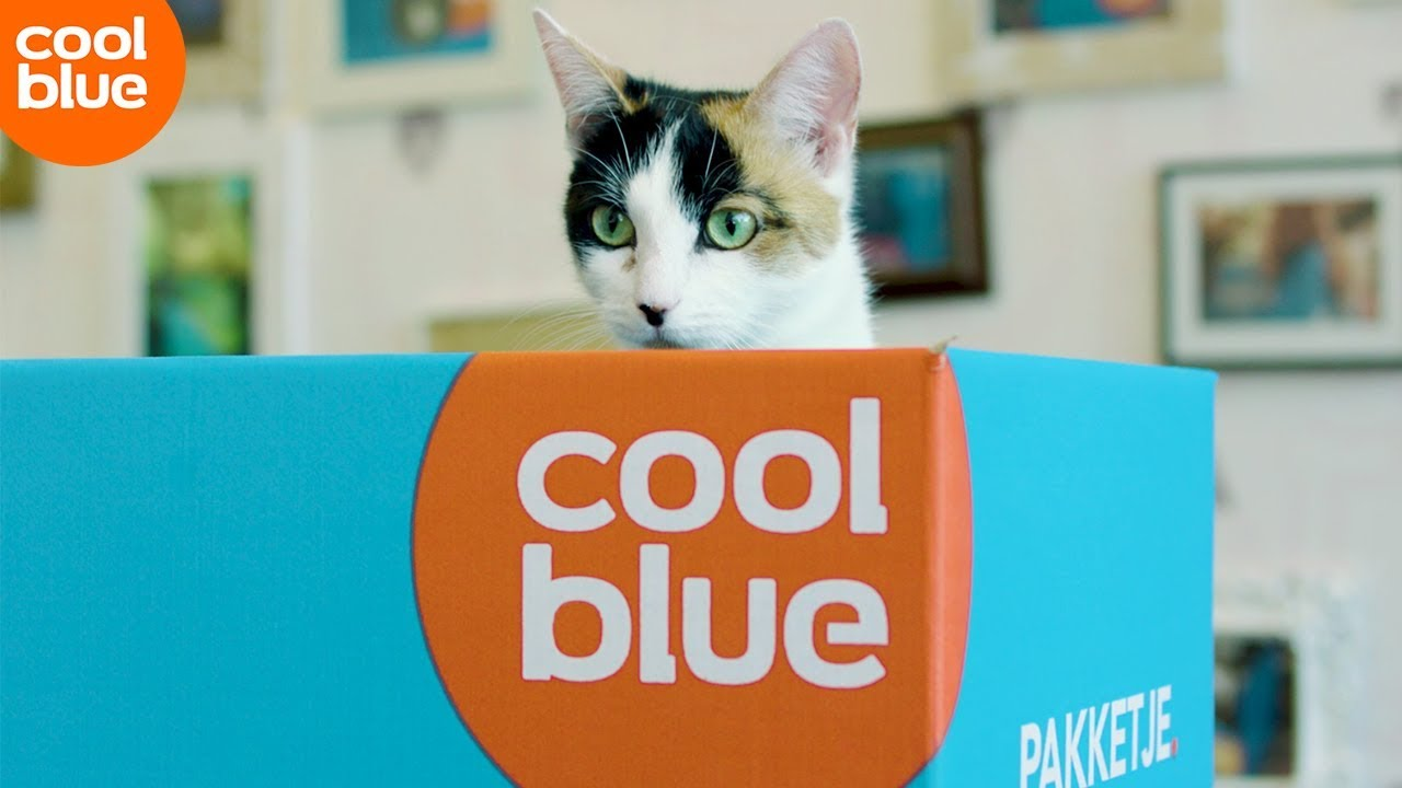 Coolblue kattenkalender