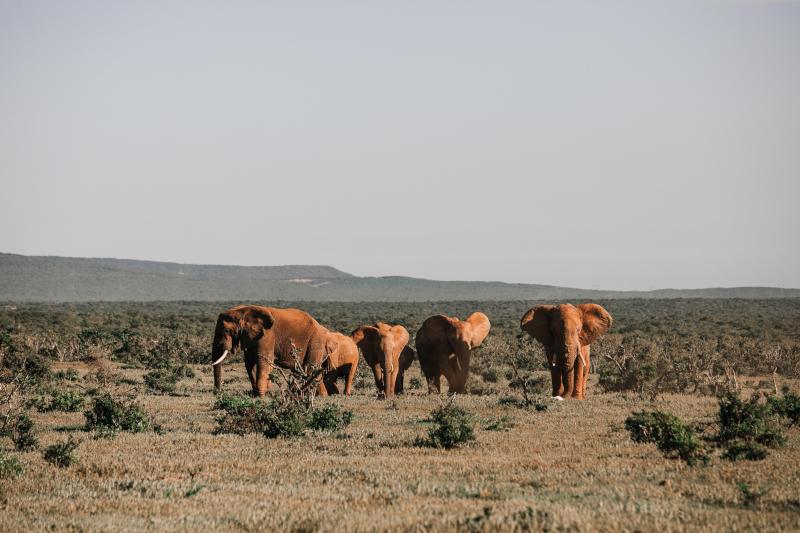 Vaker op safari met wilde rewards